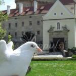 svadobne_holubice_4